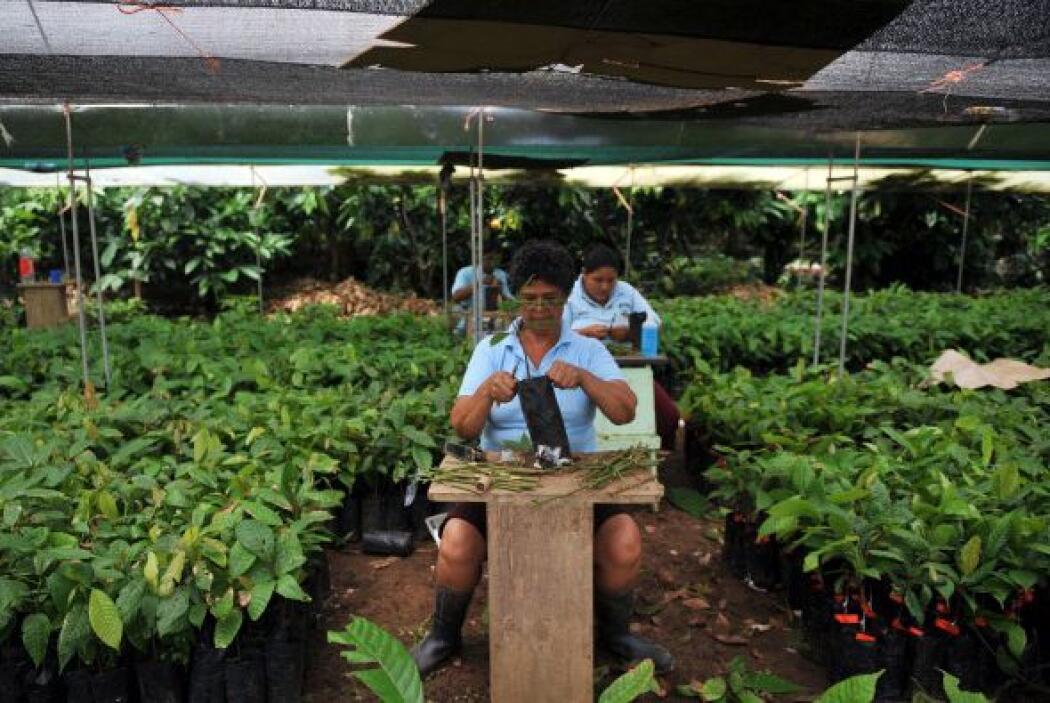 9. COSTA RICA. Alcanza el 34%.