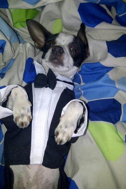 Mi Mascota en Despierta América
