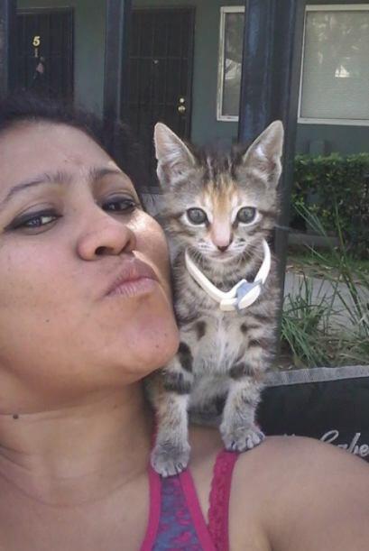 ¡Qué bello! El gatito de @f07k15 sí que es una de las #MascotasAmorosas.