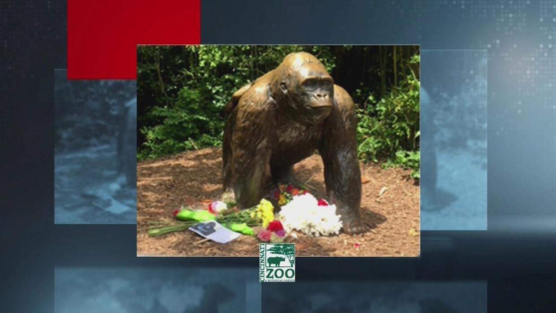 Indignación por la muerte del gorila en zoológico de Cincinnati