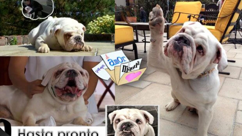 Sansón, el perro de Porque El Amor Manda, falleció de un paro cardiorres...