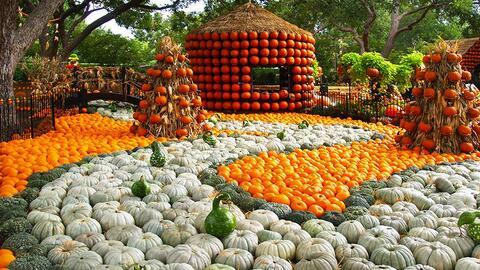 Ferias Gastronómicas 01_autum-at-the-arboretum.jpg