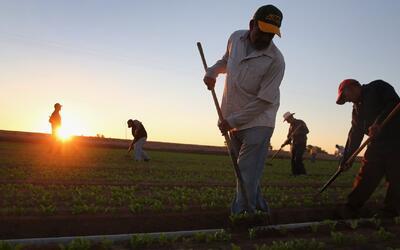 California es el estado que más inmigrantes emplea en EEUU, según MPI