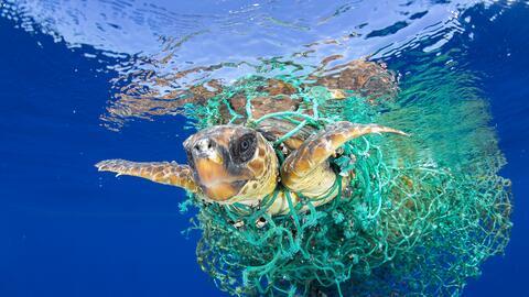 World Press Photo Naturaleza