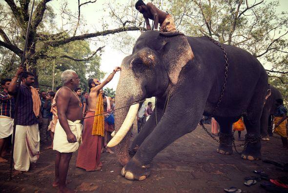Los elefantes terminaron rápidamente toda la comida que habían preparado...