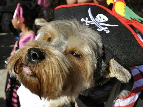 El Desfile de Disfraces de Halloween para perros estuvo lleno de origina...