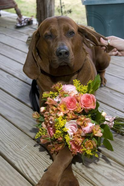 Recuerda definir el rol de tu perro de acuerdo a su temperamento y edad,...
