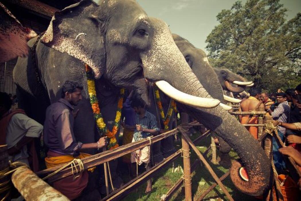 La ceremonia es llevada a cabo en  el templo Vadakkunnathan uno de los m...
