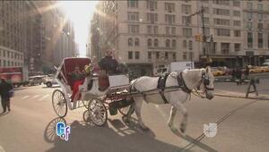 Los tradicionales carruajes se quedarán en Nueva York, pero no será como...