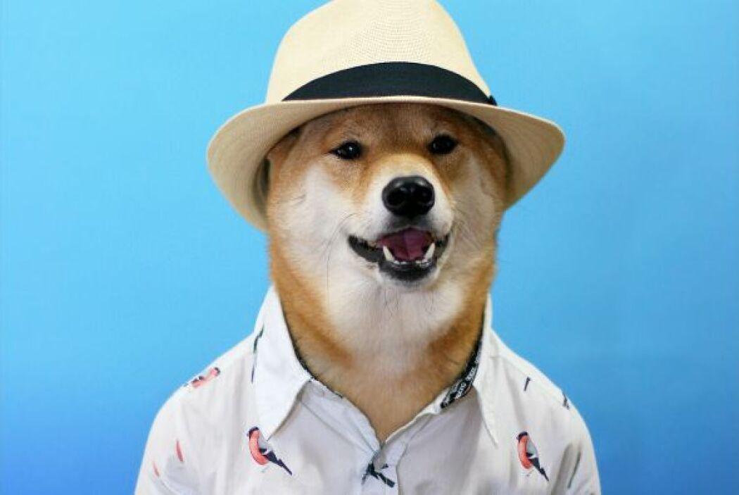 Casual para dar un paseo con esta fresca camisa y un sombrero Fedora ide...