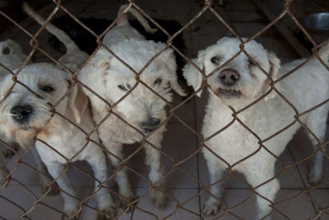En la Ciudad de México se estima que cada año, alrededor de 18 mil perro...
