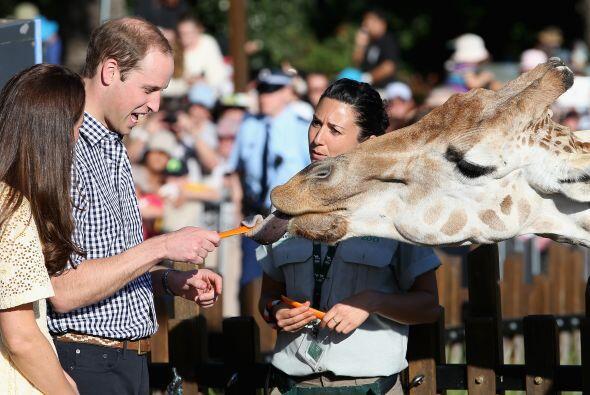 William luego alimentó a una jirafa.Más videos de Chismes...