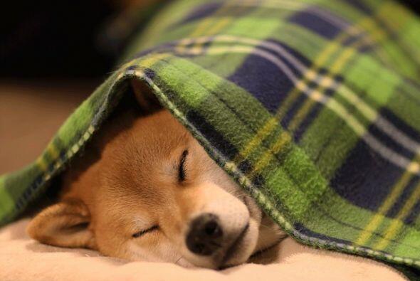Dulces sueños a Taro.