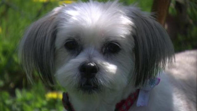 Lilly, de 9 años, viajó más de mil millas.