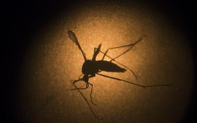 Los esfuerzos de prevención se concentran en el control del Aedes Aegypti.
