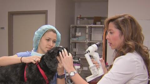 ¿Cuál es la importancia del cuidado de los ojos de las mascotas?