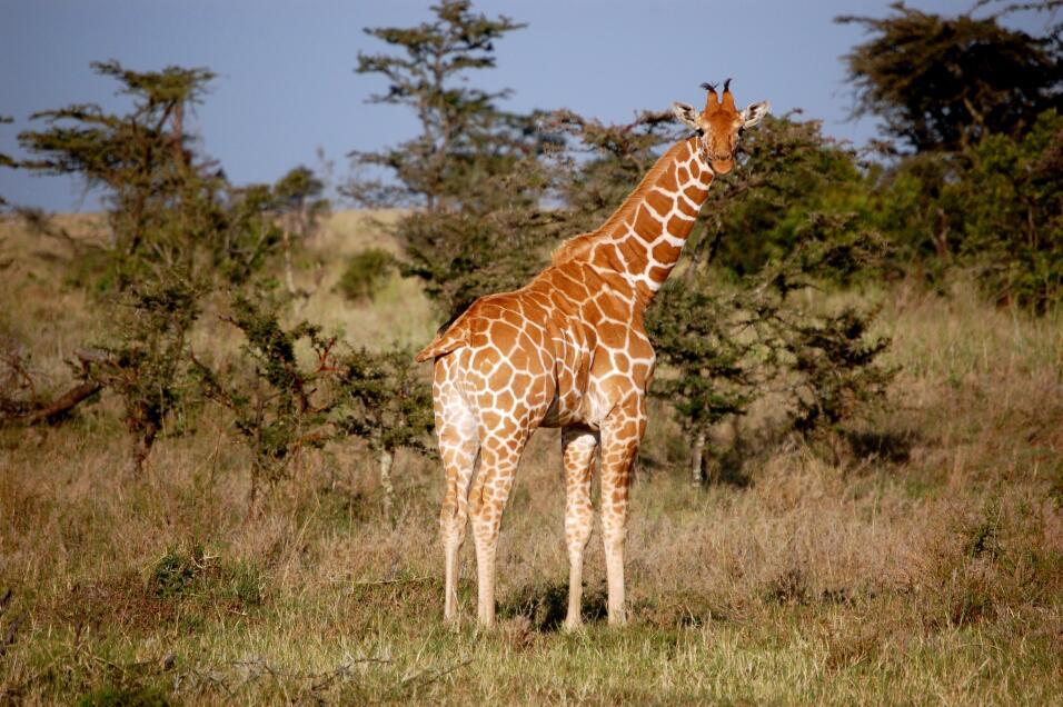 La región de Laikipia, en Kenia.