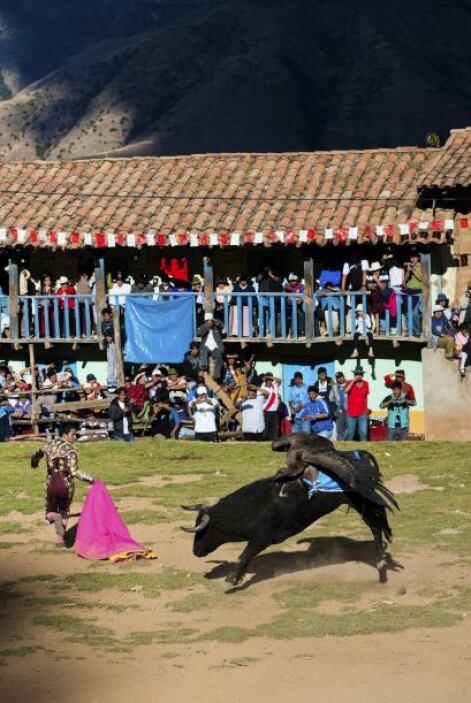 Sin embargo, los indios no suelen permitir que los animales luchar por m...