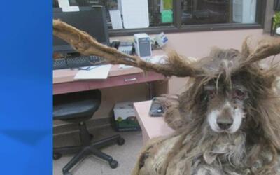 Semana de prevención de la crueldad hacia los animales en Arizona