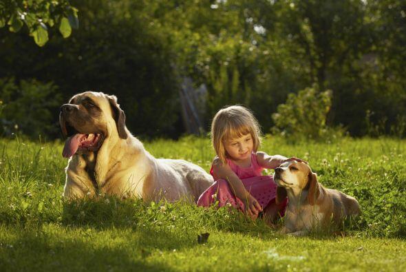 Los canes resultan una excelente terapia para niños que presenten pertur...