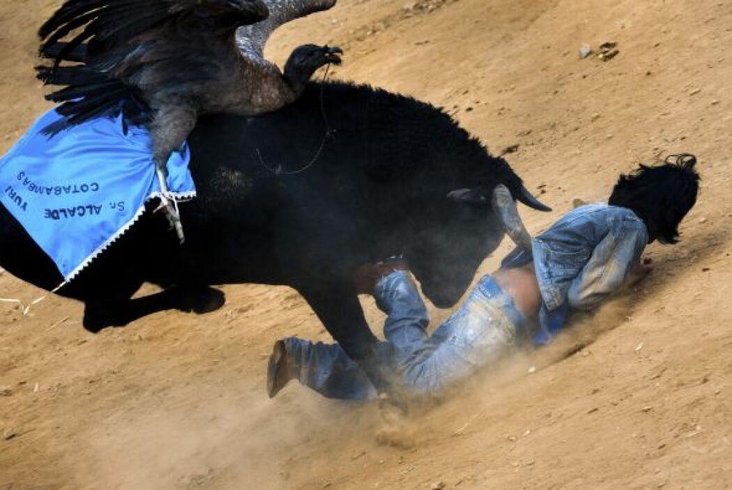 El cóndor capturado se ata en la espalda del toro que ha sido cuidadosam...