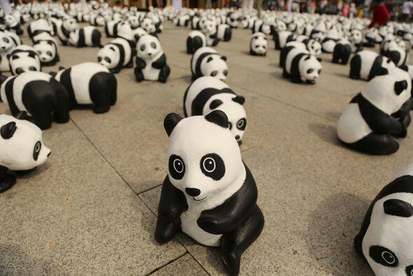 Los pandas se encuentran en peligro de extinción por el calentami...