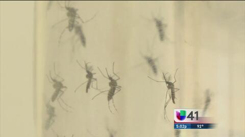 Detectan presencia del virus del Nilo en el condado Bexar