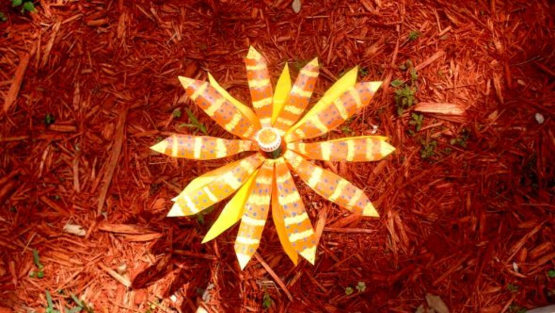 Una de las flores que ahora adornan el jardín de Sweetwater.