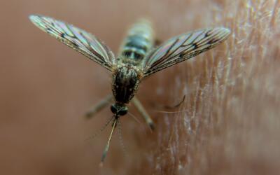 Los mosquitos no respetan fronteras, de ahí la importancia de que...
