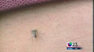 Cuidado al viajar al Caribe, podría contraer chikunguña