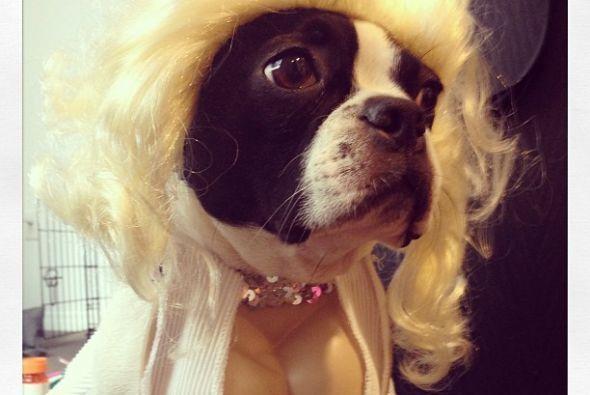 Este pequeño canino, al que llamaba Miss Verna Pearl, era uno de sus gra...