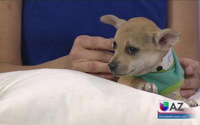 Campamento en Phoenix para niños que quieren ser veterinarios