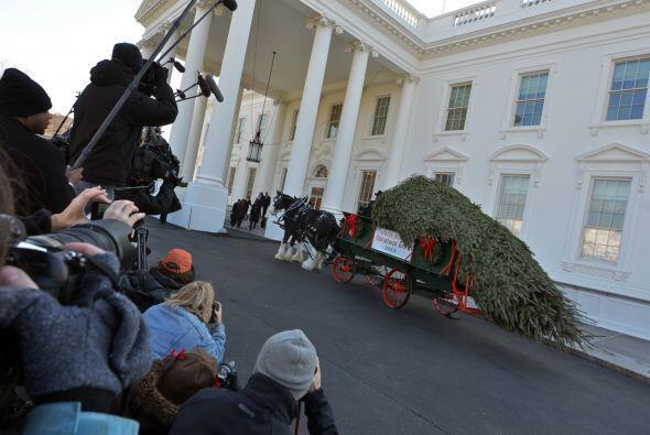El árbol que engalanará la temporada de fiestas en la residencia preside...