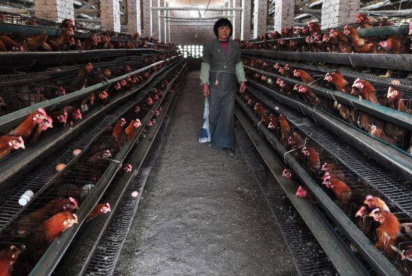 Entretanto en Shanghái ya se han sacrificado 20,536 pollos, patos, ganso...
