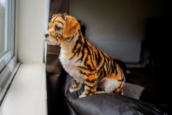 ¿Ustedes pintarían a su mascota por un tiempo?