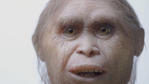 Esta foto muestra una reconstrucción de un modelo del Homo flores...