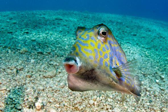 A otro animal que le agradó el lente de la cámara fue a este pequeño pez