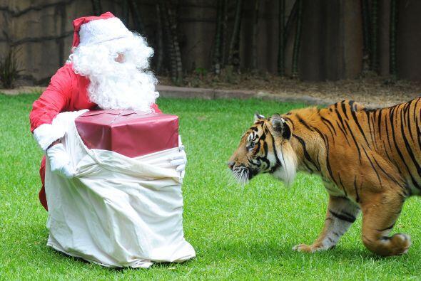¡Ay Santa, en qué líos te metes!