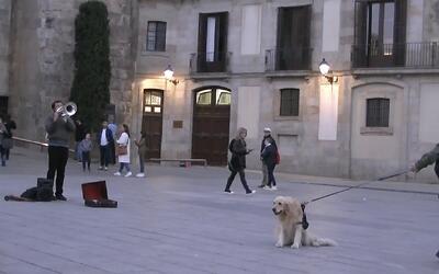 Este perro obliga a su dueño a detenerse para escuchar una canción