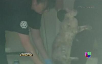Más de 79 gatos fueron rescatados de una casa que iba a subasta