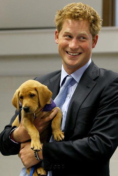El príncipe Harry tuvo conexión inmediata con este cachorr...