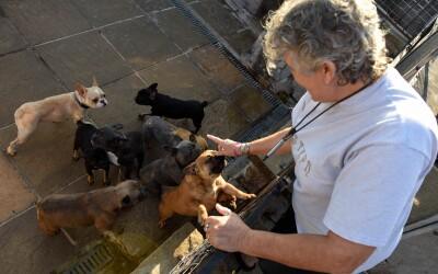 ¡Guau! Ella le dio un hogar a 41 perros