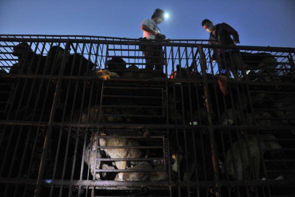 El destino de los caninos era un matadero en Pekín, para más tarde ser l...