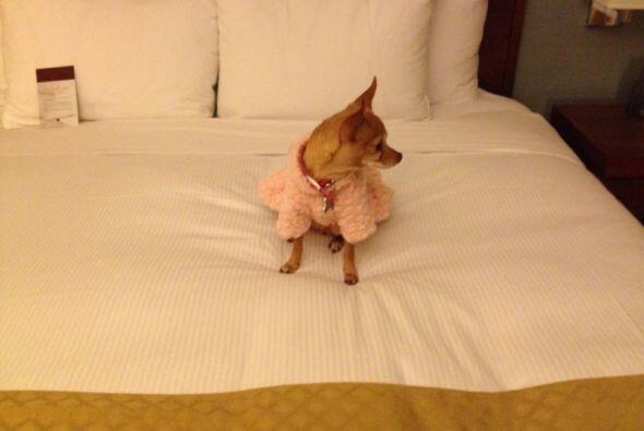 Tremenda camita para que Honey pasara su primer noche en Nueva York.