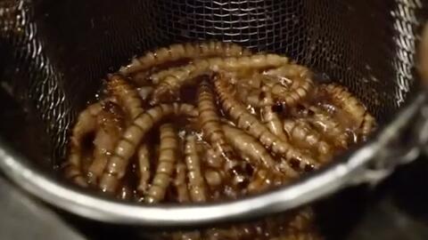 ¿Le pondrías insectos a tus noodles?