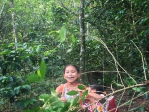 Los niños campesinos son obligados a trabajar en las plantaciones...