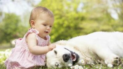 Adquirir un animalito para que viva con tu bebé es una gran decisión. ¡R...