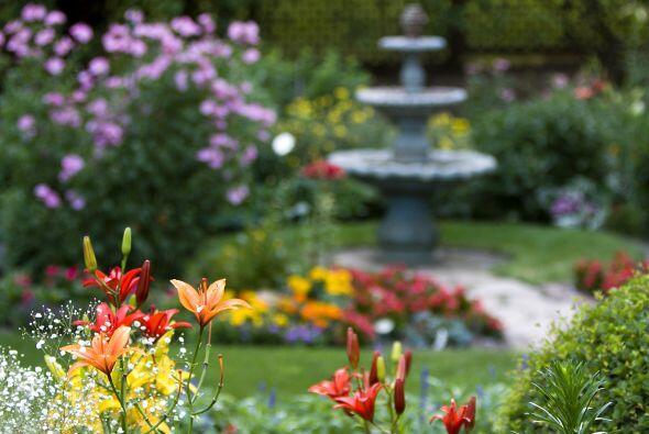 Elige una combinación simple al decidir qué plantas formarán parte de tu...