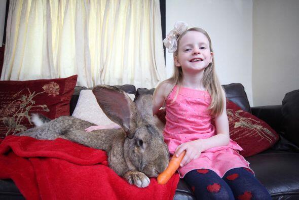 Conejo gigante que come cuatro mil Darius pesa 48 libras, mide 52 pulgad...