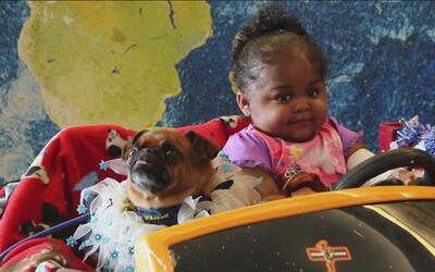 Perros de terapia llevaron alegría a Mattel Children's Hospital UCLA